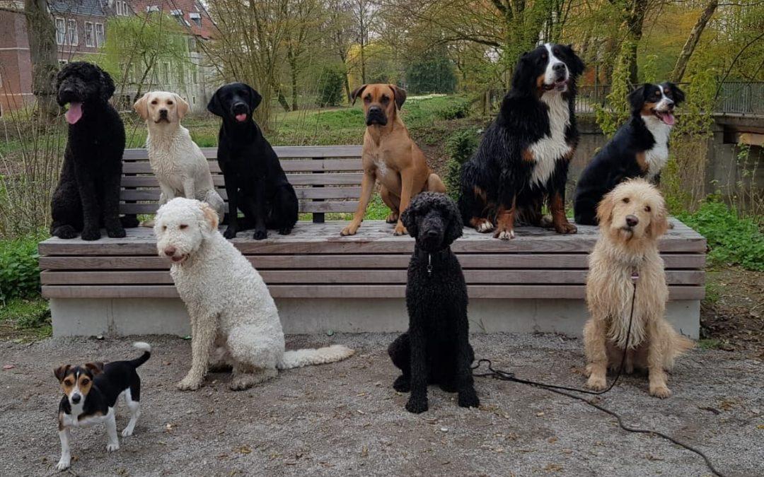 Unterwegs mit Hundefreunden!