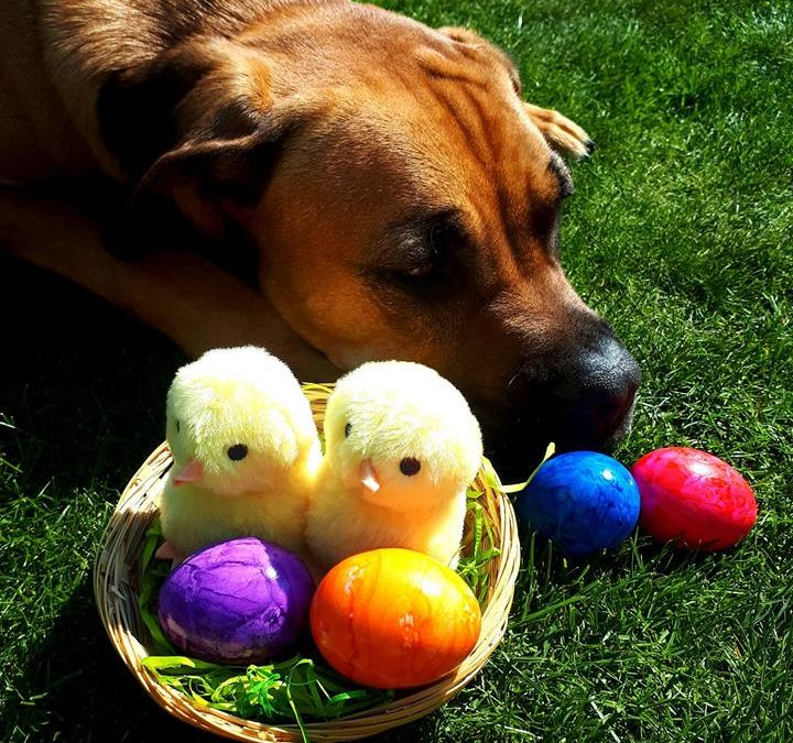 Frohe Ostern!!!
