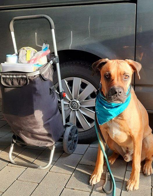 Hundeführerschein mit Cooper