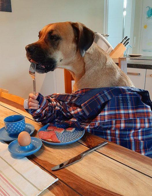 Tag-des-Hundes Challenge Teil 1