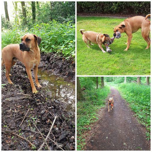 Tag-des- Hundes-Challenge Teil 2