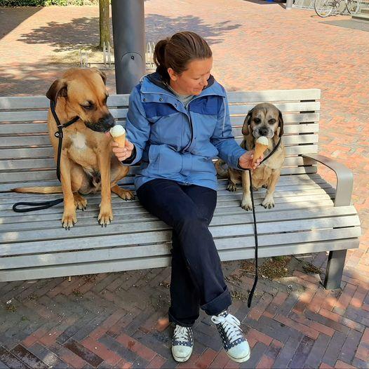Tag-des- Hundes- Challenge Teil 3