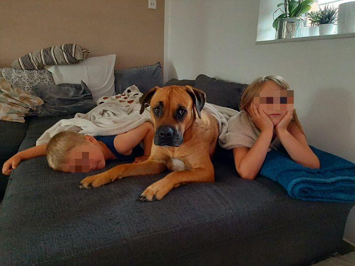 Tag-des-Hundes-Challenge Teil 4