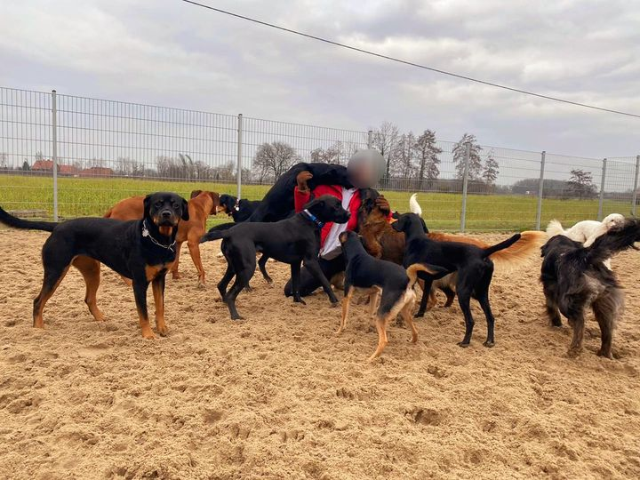 Drive Inn für Hunde